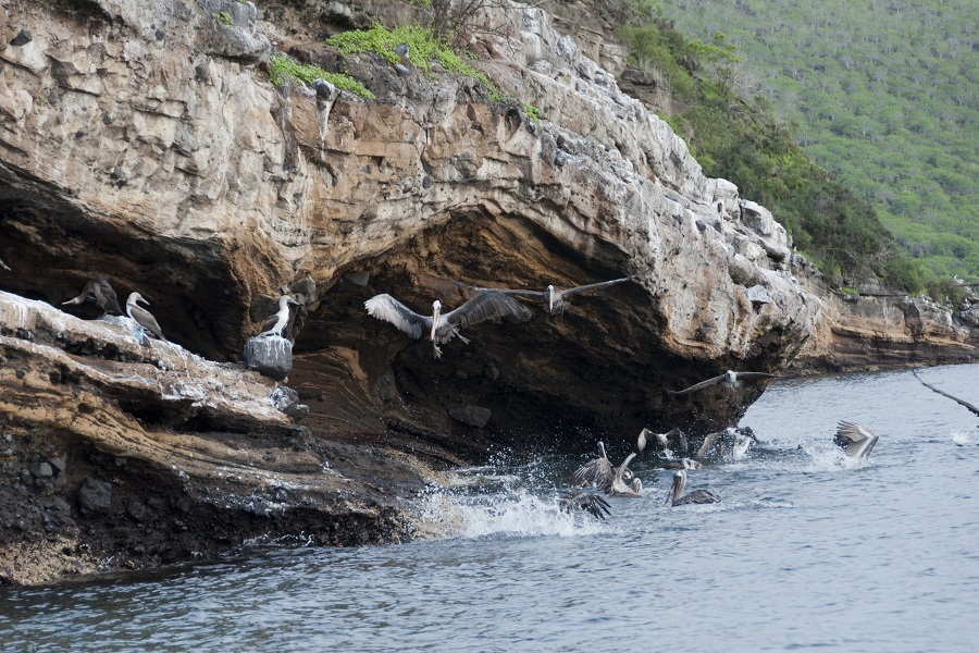 M/V Origin: Western & Northern Galapagos Islands