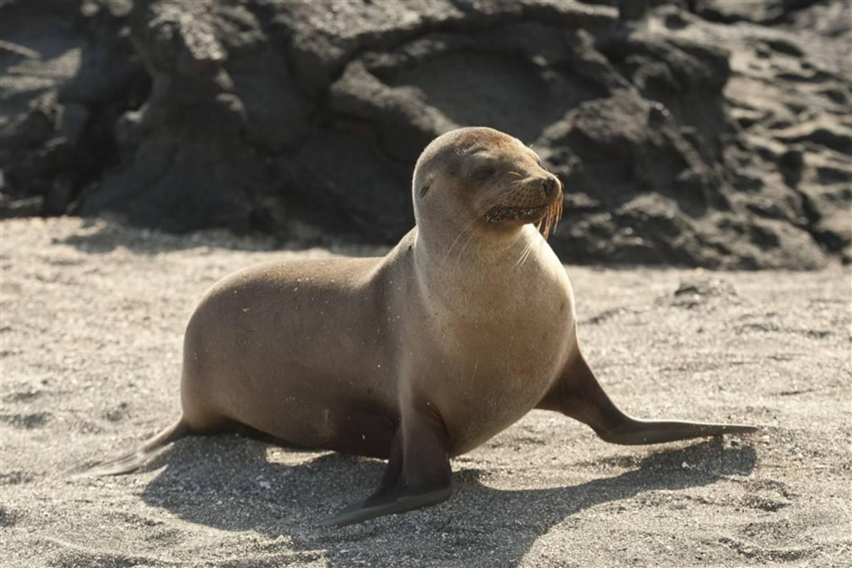 North Galapagos Islands