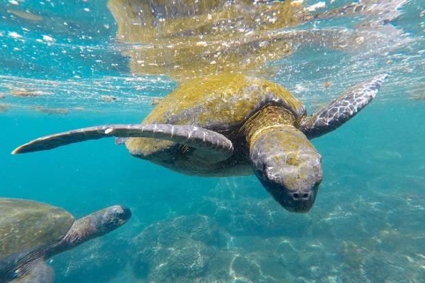 Coral I & II: South Galapagos Islands