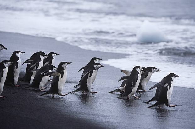 Ocean Adventurer: Antarctic Express - Fly the Drake