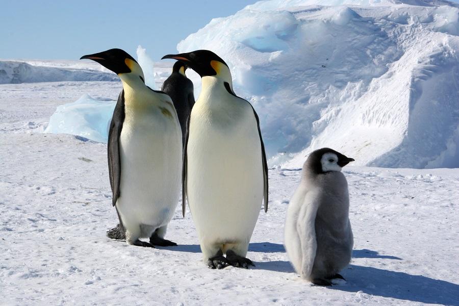 M/V Ortelius: Antarctic Peninsula - Basecamp