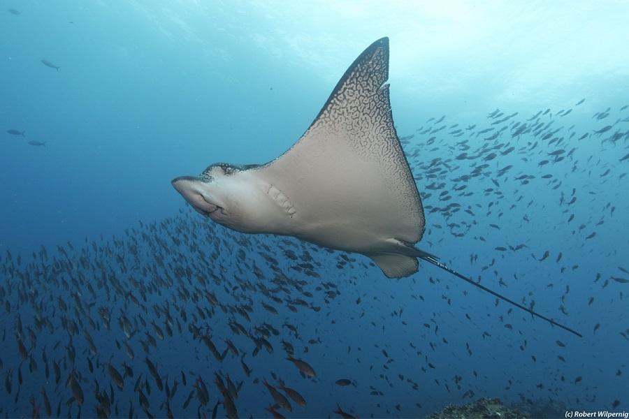 Galapagos Master: Diving Cruise