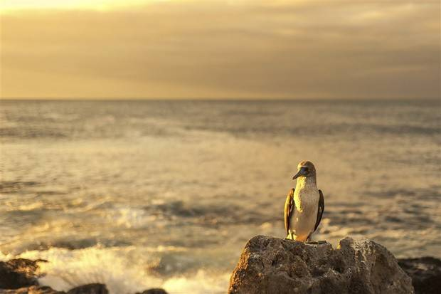 Archipell II: Central & South Galapagos Islands