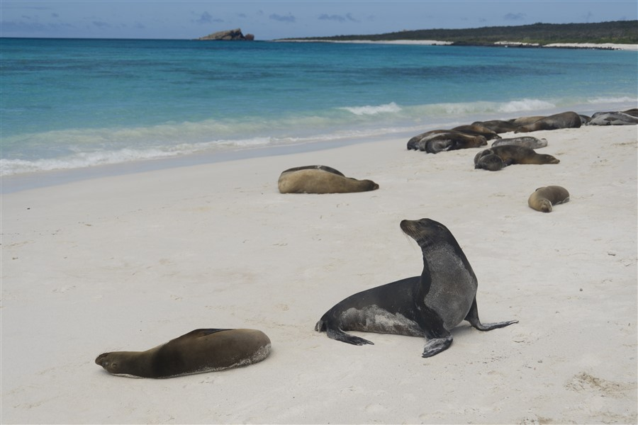 M/C Alya: East Galapagos Islands