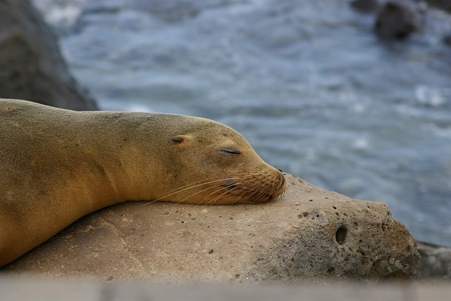 Natural Paradise: South & West Galapagos Islands