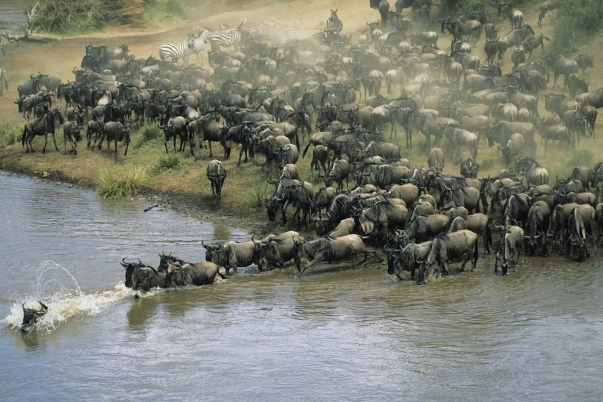East Africa Migration Discoverer ex. Arusha