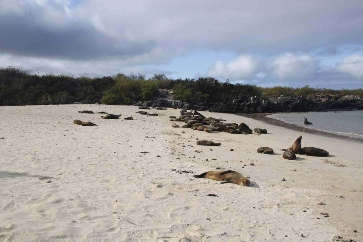 Reina Silvia: West Galapagos Islands