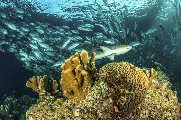 Archipell II: Western Galapagos Islands