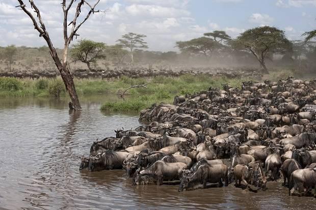 East Africa Migration Discoverer ex. Nairobi