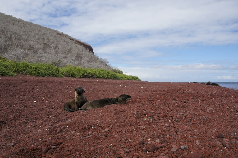 Eric & Letty: Western and Northern Galapagos Islands