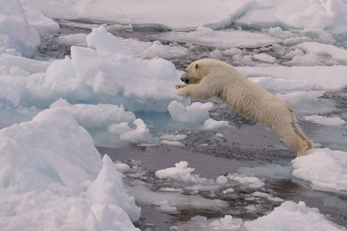 M/V Plancius: North Spitsbergen, In Search of Polar Bear & Pack Ice