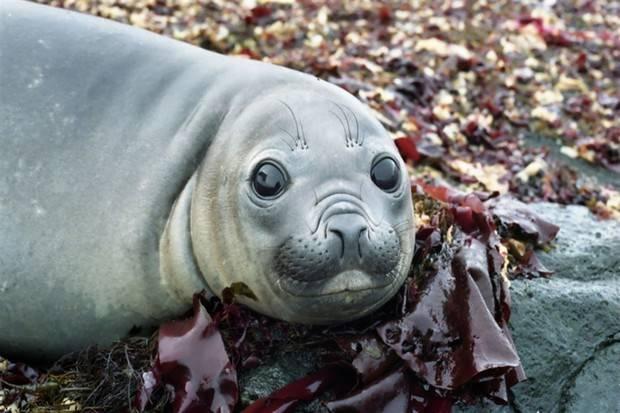 Ocean Diamond: Falklands, South Georgia & Antarctica - Explorers and Kings