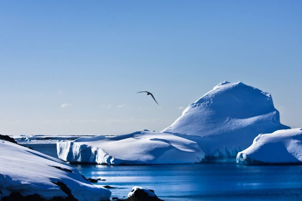 Journey to Antarctica - The White Continent