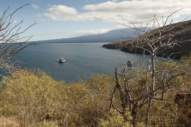 M/S Beagle: Northern & Western Galapagos Islands