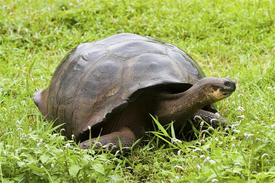 Treasure of Galapagos: Central Galapagos Islands