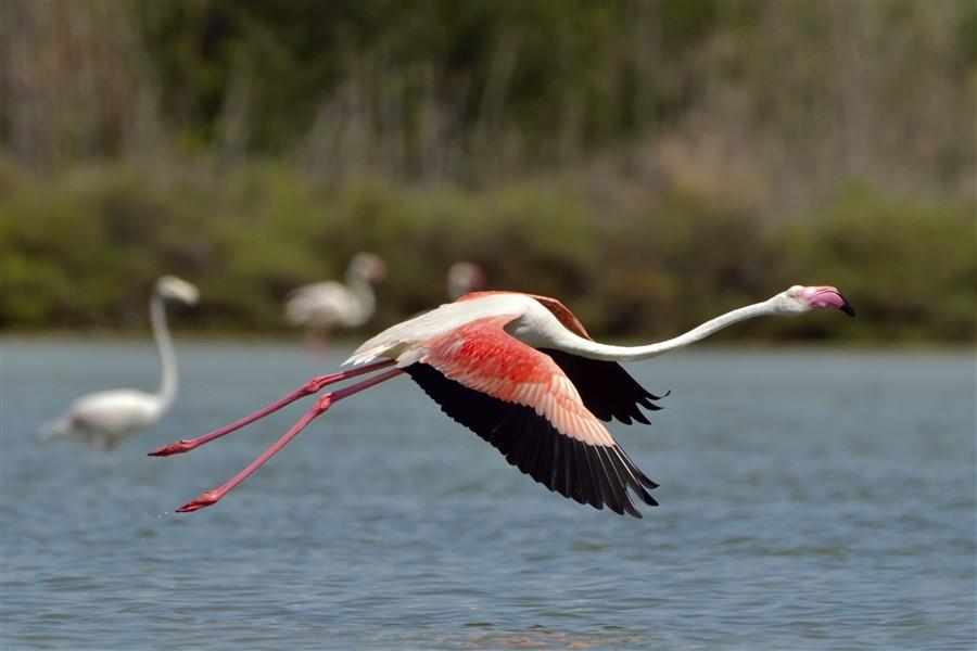 Petrel: South Galapagos Islands