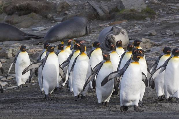 Sea Spirit: Falklands, South Georgia & Antarctica - Antarctic Wildlife Adventure end Ushuaia