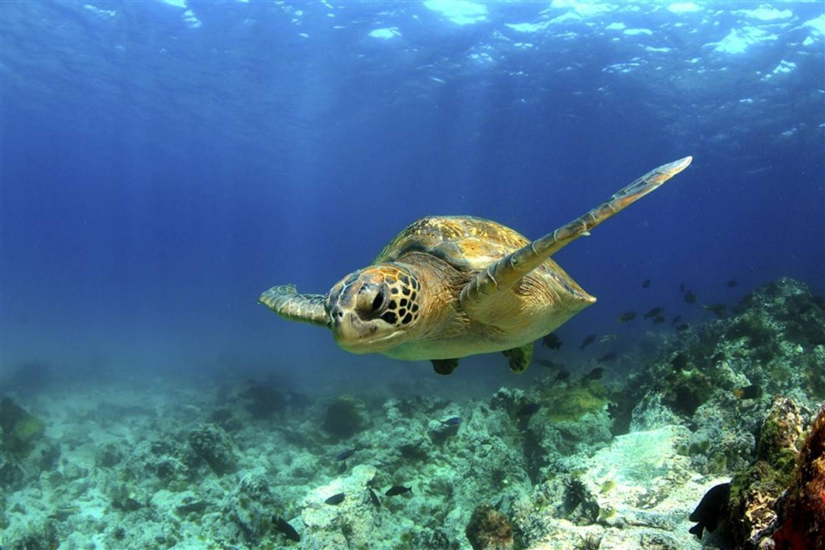 Central Galapagos Islands