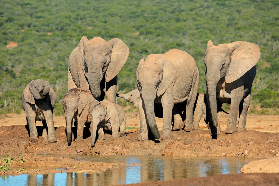 Kenya & Tanzania Small Group Splendour