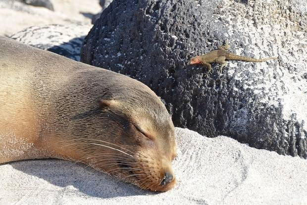 7 Day Xavier III: Galapagos Land & Sea - Central and East Islands
