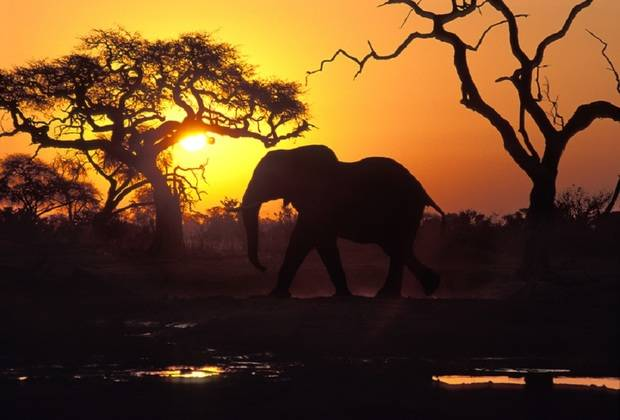 Zimbabwe & Botswana Game Tracker