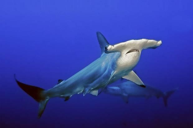 Nortada: Galapagos Live-Aboard Diving