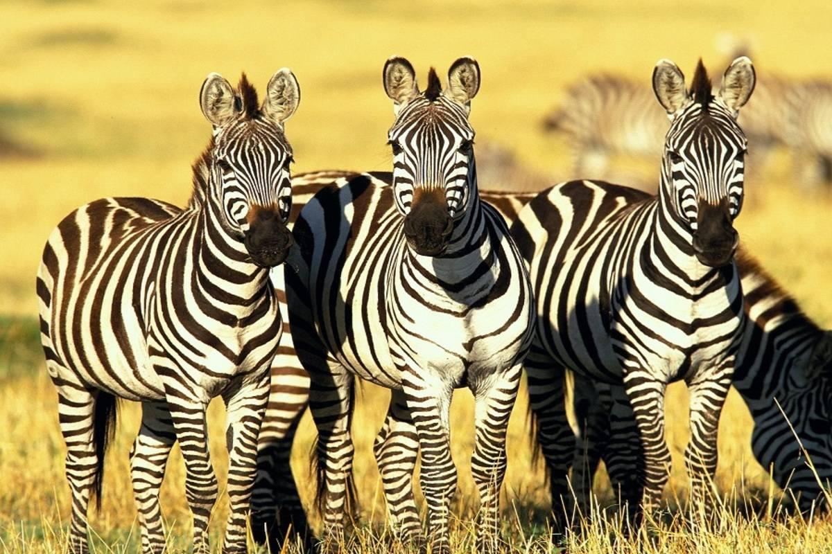Kenya Classic Sky Safari by Elewana