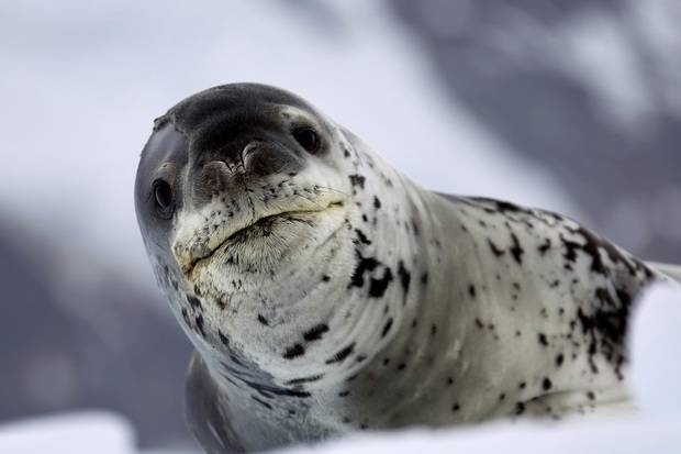 World Explorer: Antarctic Explorer - Discovering the 7th Continent