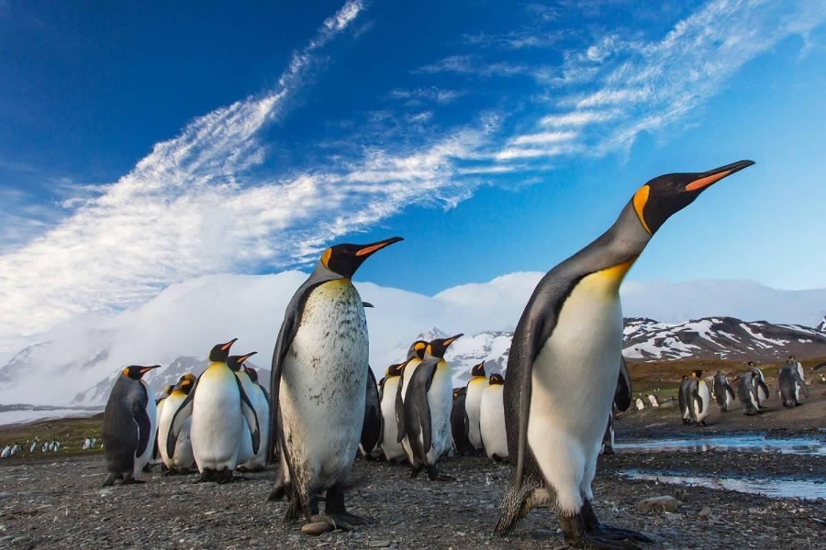 M/V Hondius: Falkland Islands, South Georgia and the Polar Circle
