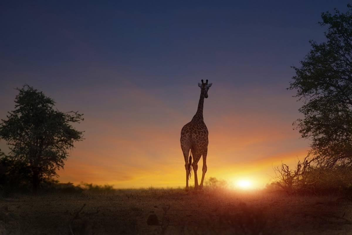 Simba Safari: Tanzania (Serena Safari Lodges)