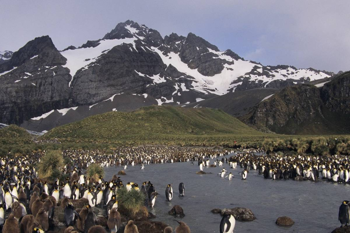 Ocean Diamond: South Georgia & Antarctic Peninsula - Penguin Safari