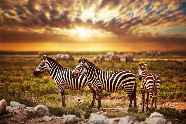Comprehensive Kenya & Tanzania