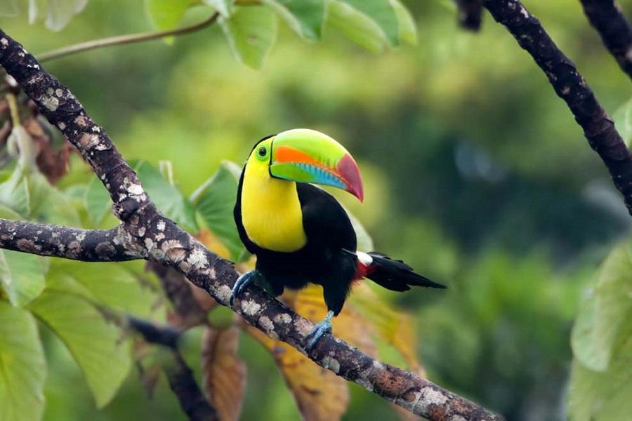 RCGS Resolute: Central America Adventure