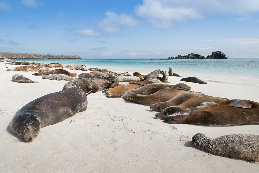 Eric & Letty: Southern and Central Galapagos Islands