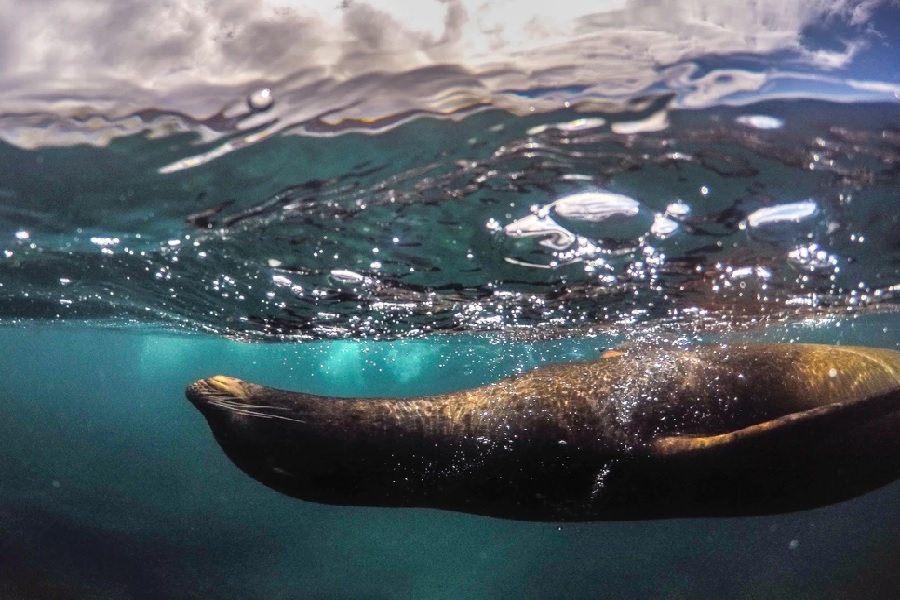 Grand Majestic: Central & North Galapagos Islands