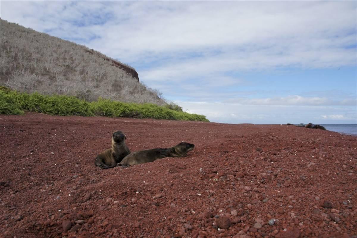 Eden: Complete Galapagos