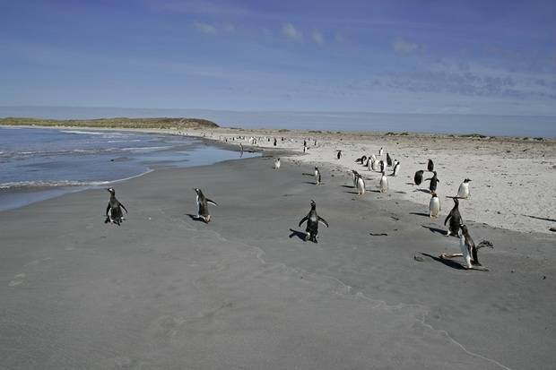 Scenic Eclipse: Antarctica, South Georgia & Falkland Islands - Voyage 201S