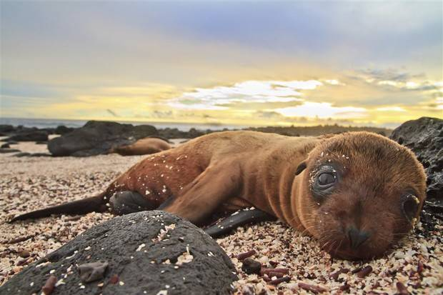Archipell I: Central & South Galapagos Islands