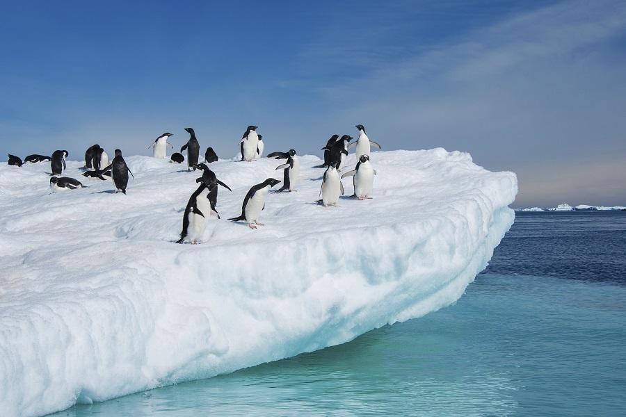 Vavilov: Ultimate Christmas in Antarctica