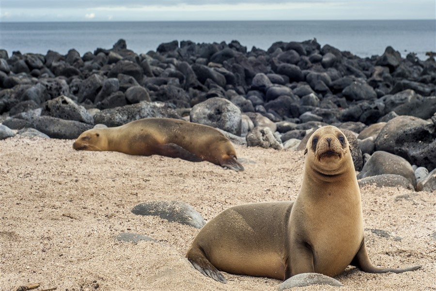 Archipell II: South & East Galapagos Islands