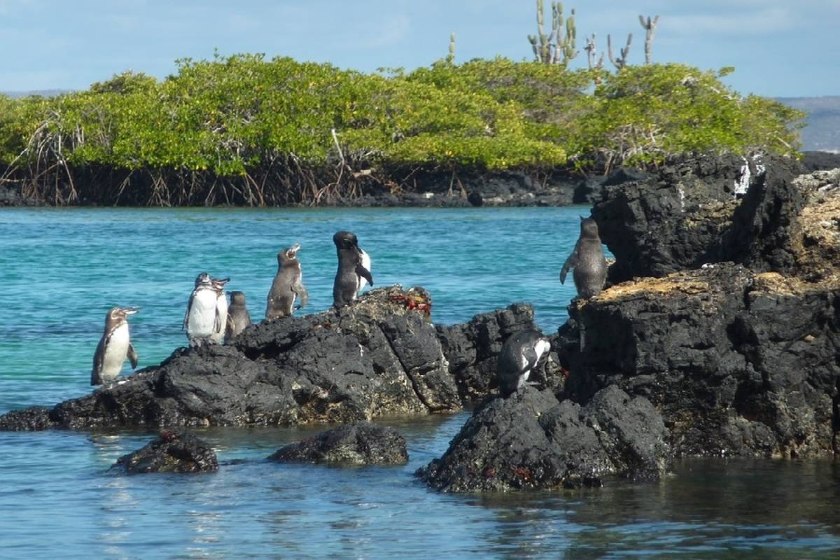Endemic: West to East Galapagos Islands