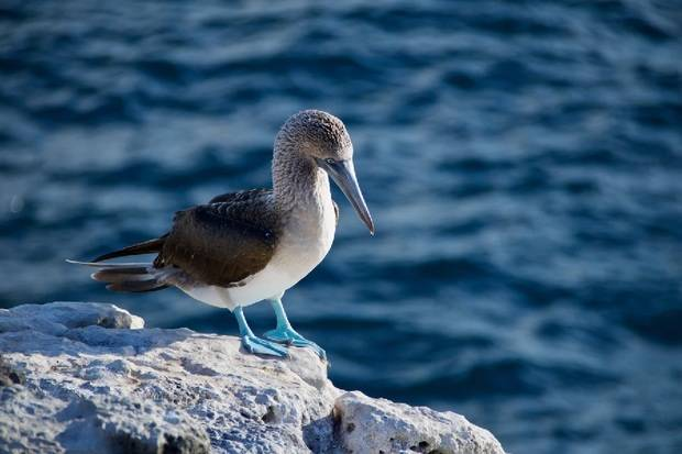 M/C Seaman Journey: South & East Galapagos Islands