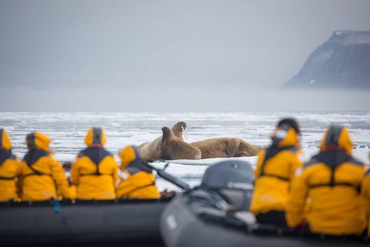 World Explorer: Spitsbergen in Depth - Big Island, Big Adventure