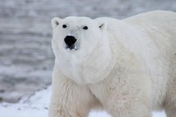 World Explorer: Spitsbergen Highlights - Expedition in Brief