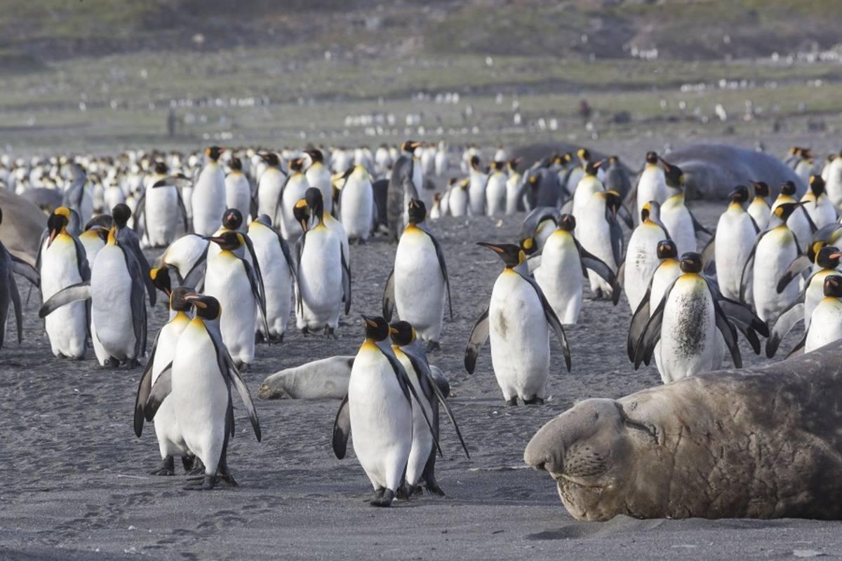 M/V Hondius: Falklands, South Georgia & Antarctica ex. Puerto Madryn