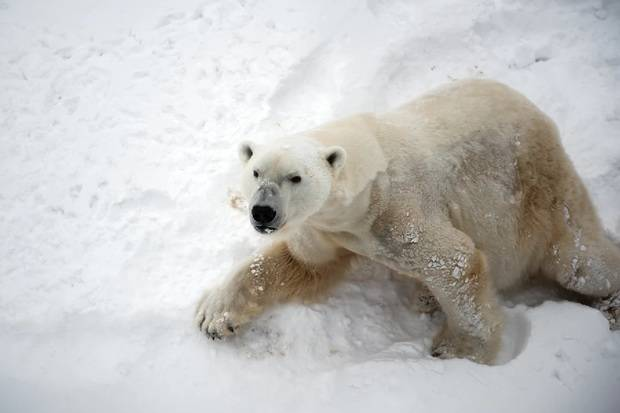 Ocean Adventurer: Spitsbergen Highlights- Expedition in Brief