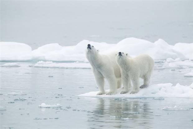 Ocean Adventurer: Spitsbergen Explorer - Wildlife Capital of the Arctic
