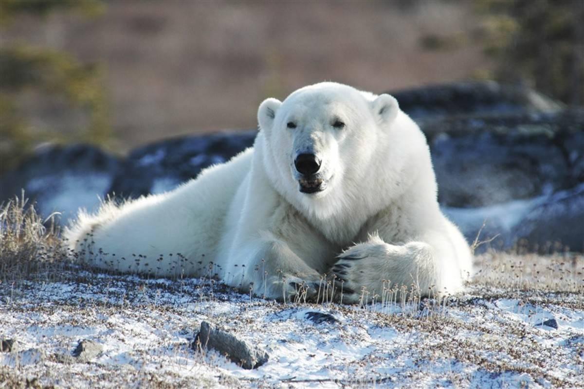 Ocean Adventurer: Spitsbergen in Depth - Big Island, Big Adventure