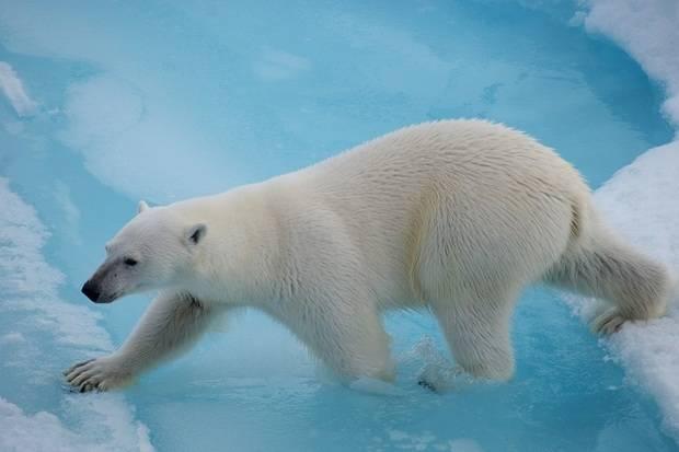 Sea Spirit: Best of Svalbard