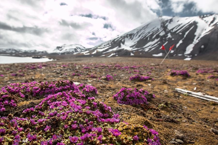 Sea Spirit: West Spitsbergen & Polar Ice Edge